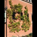 Tit Hall Vines on New Library